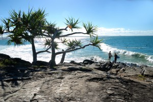 tea tree bay surfers