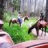 Noosa-Horse-Riding