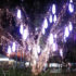 hastings-street-christmas-tree