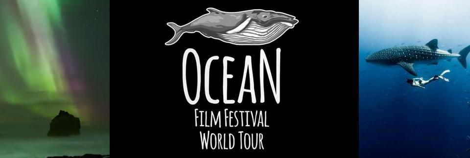 film-festival